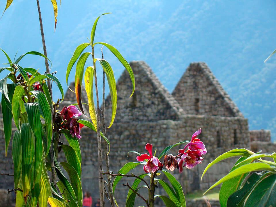 jardines en perú