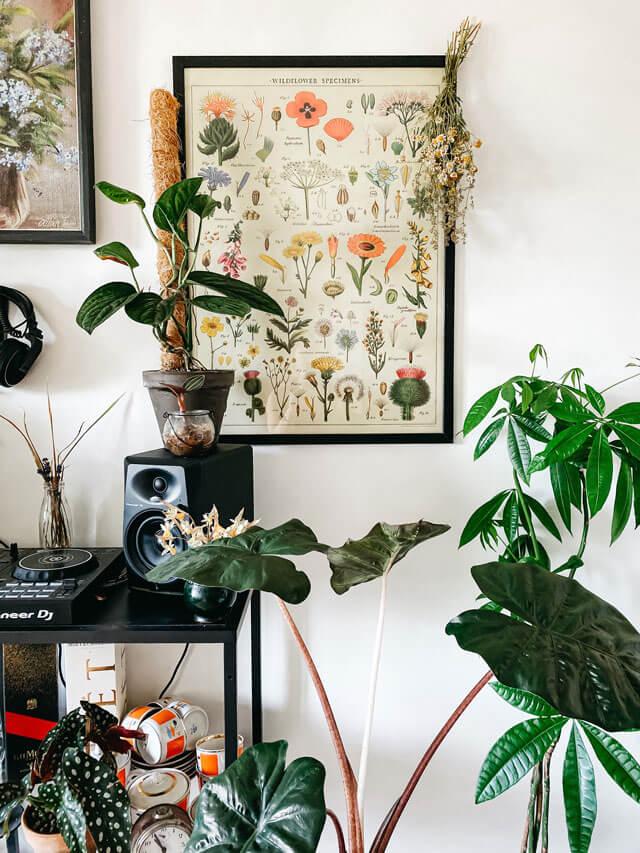 urban jungle estilo decoracion